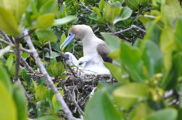 Darwin Bay, Genovesa Island, 6/3